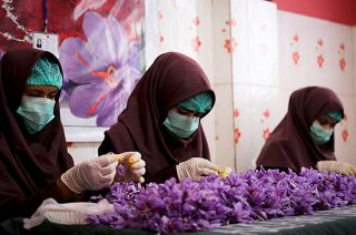 Women, dressed in burgundy burkas and wearing hygiene face masks and gloves, process saffron by hand as part of the Afghanistan Rural Enterprise Development Program.